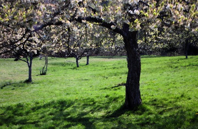 Apple Orchard at Stewart Farmhouse