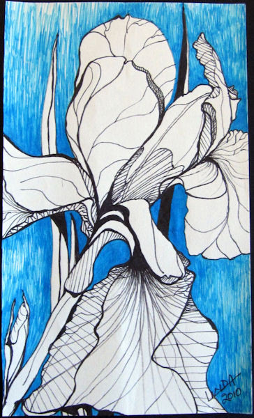 Iris on Blue Background